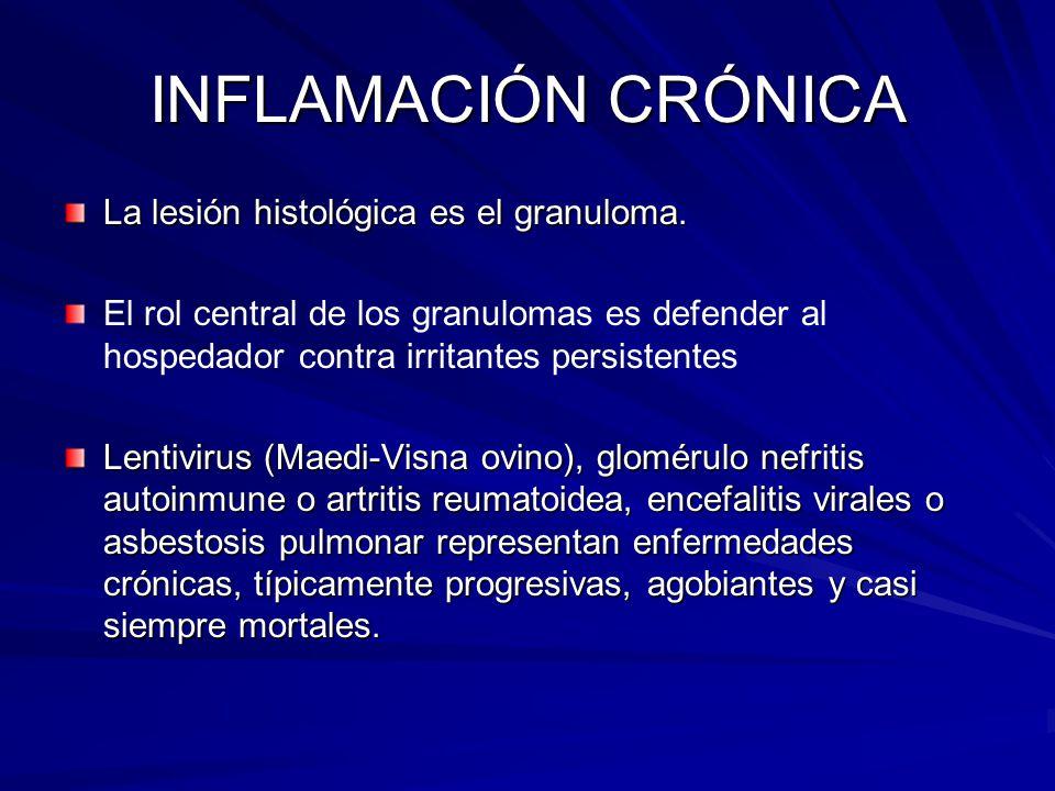 INFLAMACIÓN CRÓNICA La lesión histológica es el granuloma.