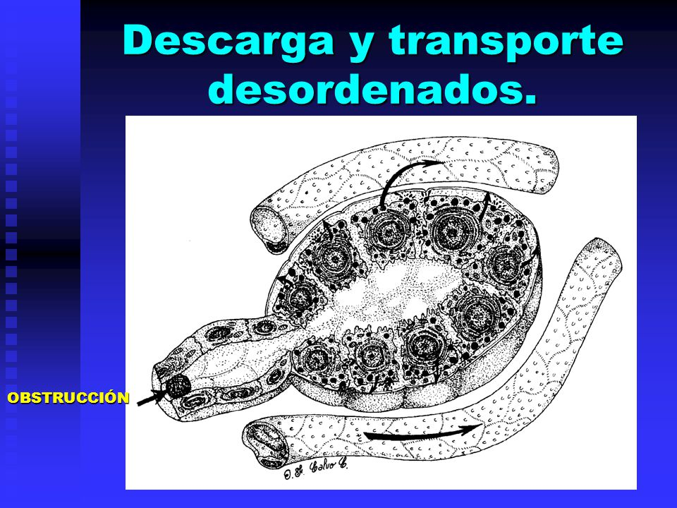 Descarga y transporte desordenados.