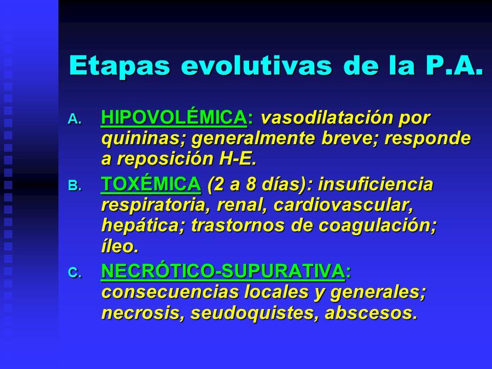 Etapas evolutivas de la P.A.