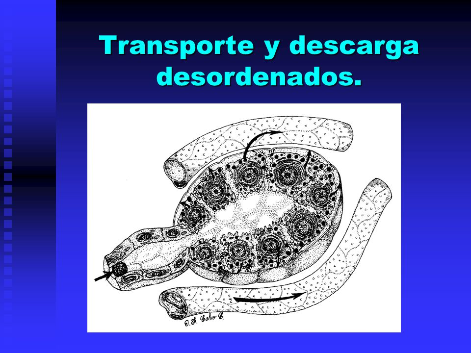 Transporte y descarga desordenados.