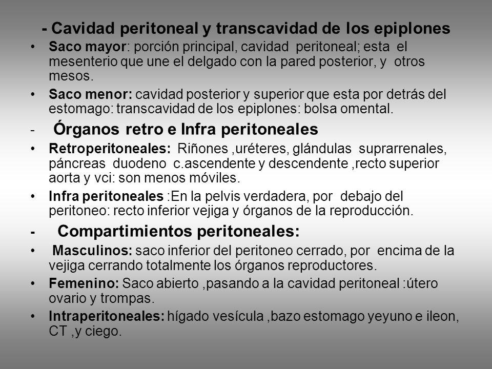 - Cavidad peritoneal y transcavidad de los epiplones