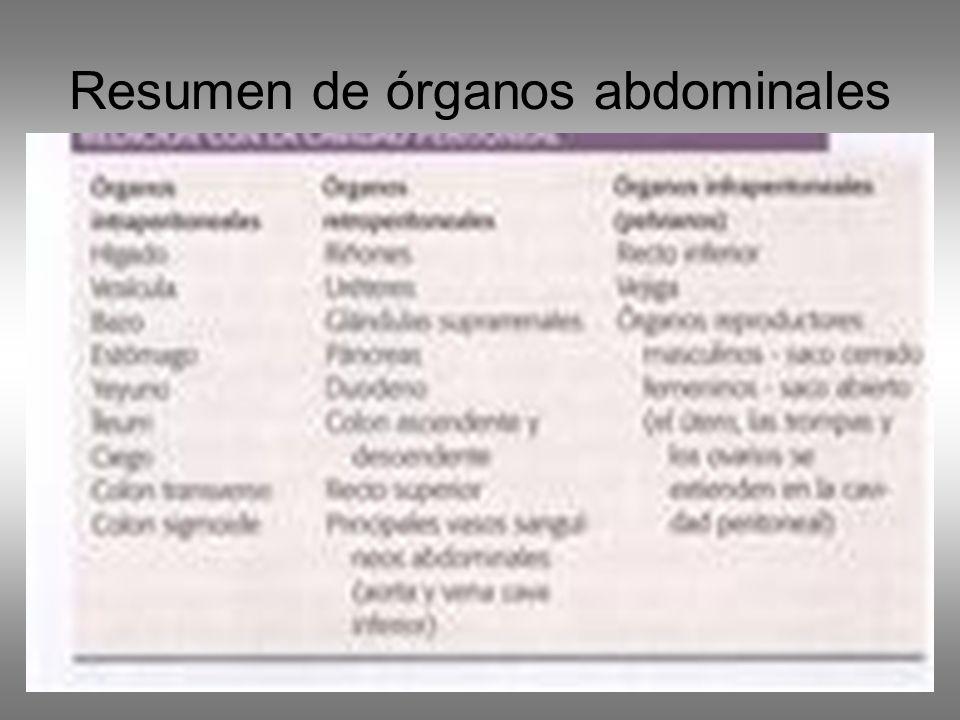 Resumen de órganos abdominales