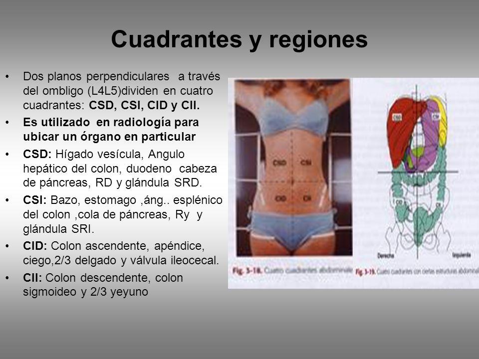 Cuadrantes y regiones Dos planos perpendiculares a través del ombligo (L4L5)dividen en cuatro cuadrantes: CSD, CSI, CID y CII.