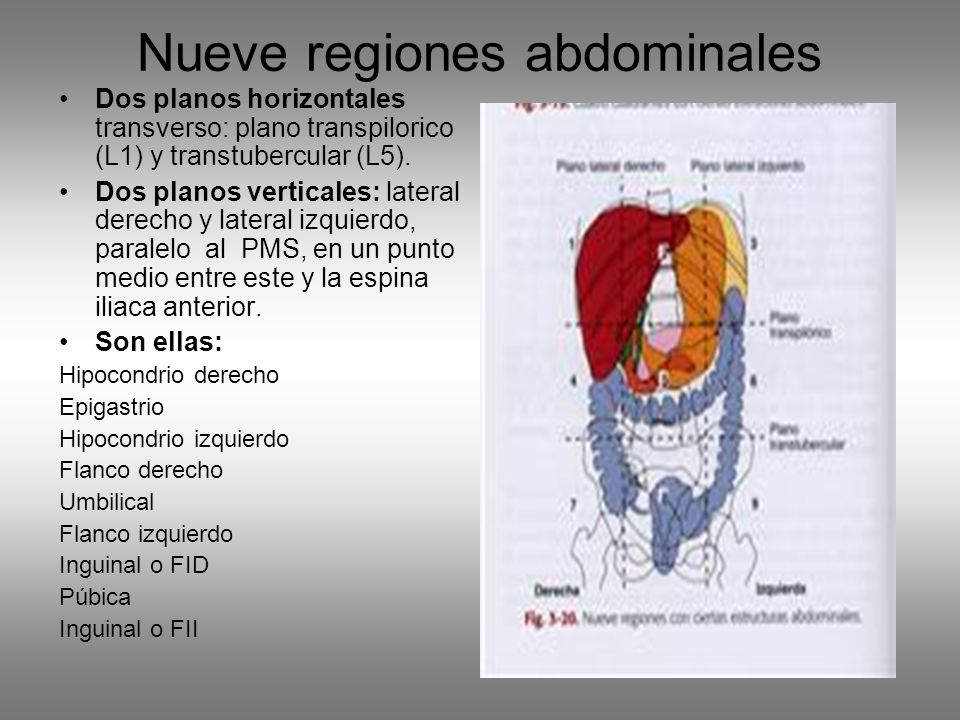 Nueve regiones abdominales