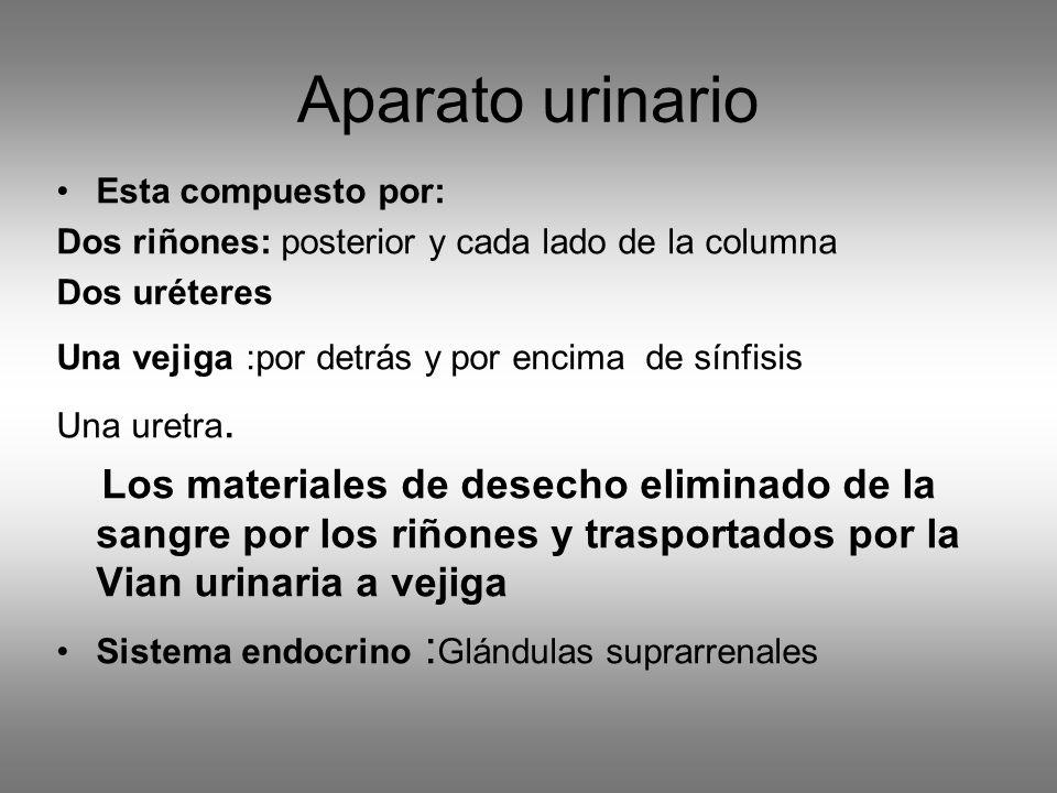 Aparato urinario Esta compuesto por: Dos riñones: posterior y cada lado de la columna. Dos uréteres.