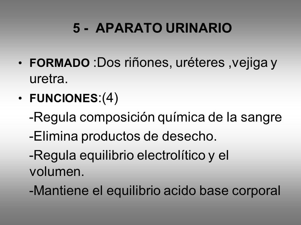 -Regula composición química de la sangre