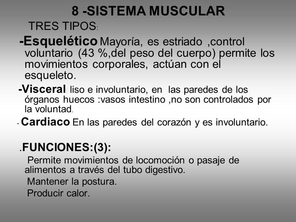 8 -SISTEMA MUSCULAR TRES TIPOS: Mantener la postura. Producir calor.