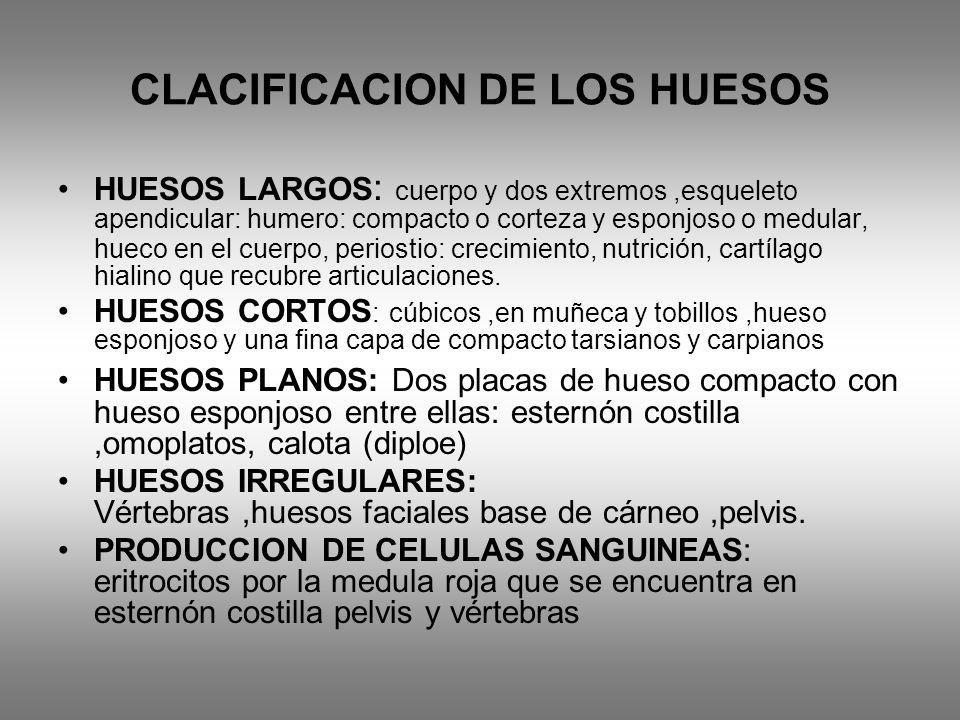 CLACIFICACION DE LOS HUESOS