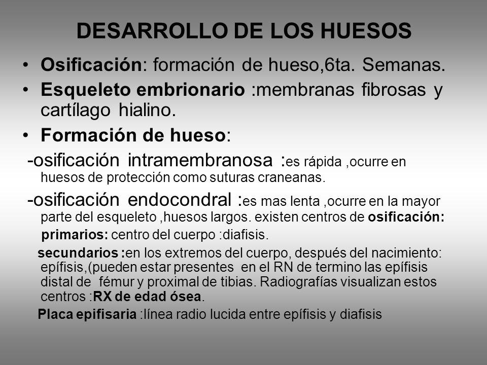 DESARROLLO DE LOS HUESOS
