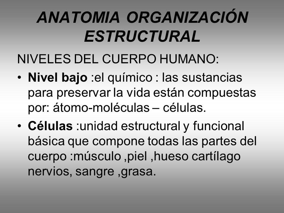 ANATOMIA ORGANIZACIÓN ESTRUCTURAL