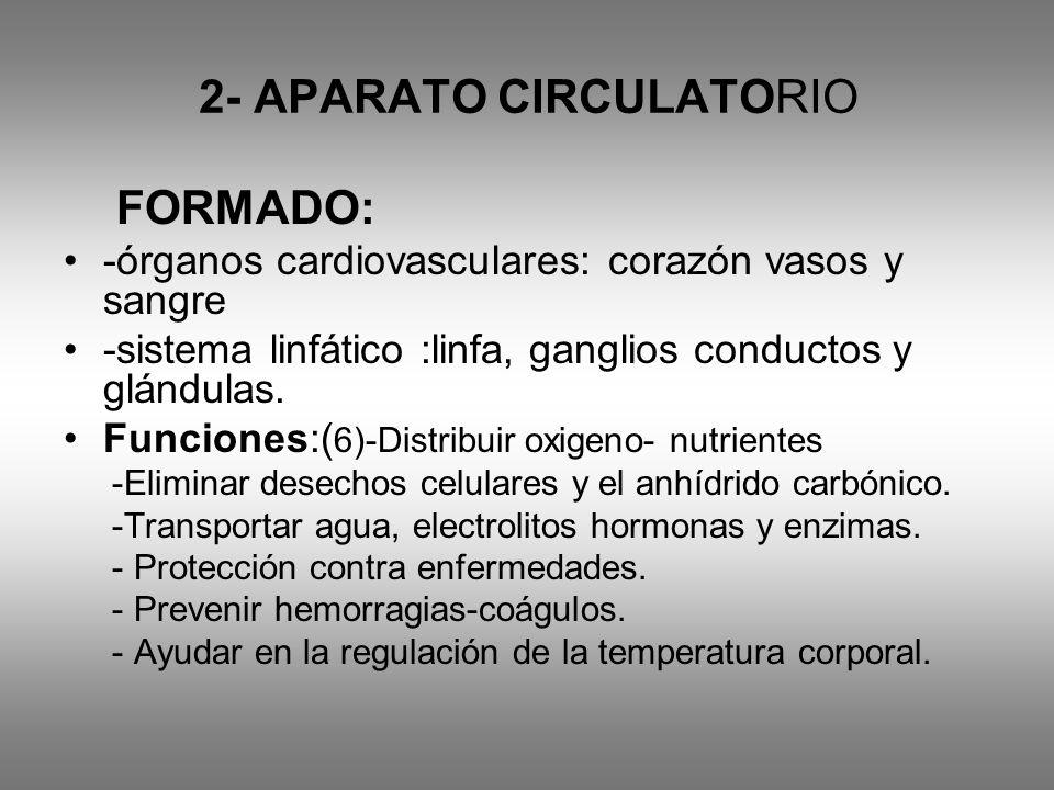 2- APARATO CIRCULATORIO