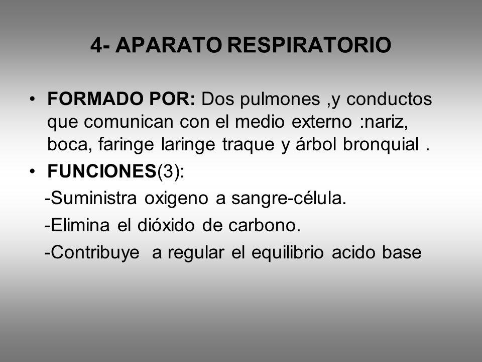 4- APARATO RESPIRATORIO