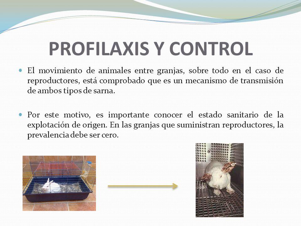 PROFILAXIS Y CONTROL