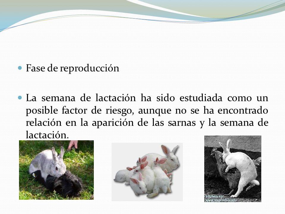 Fase de reproducción