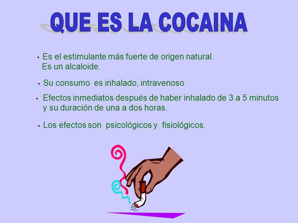 QUE ES LA COCAINA Es un alcaloide. y su duración de una a dos horas.
