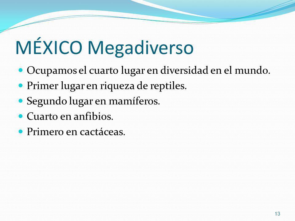 MÉXICO Megadiverso Ocupamos el cuarto lugar en diversidad en el mundo.