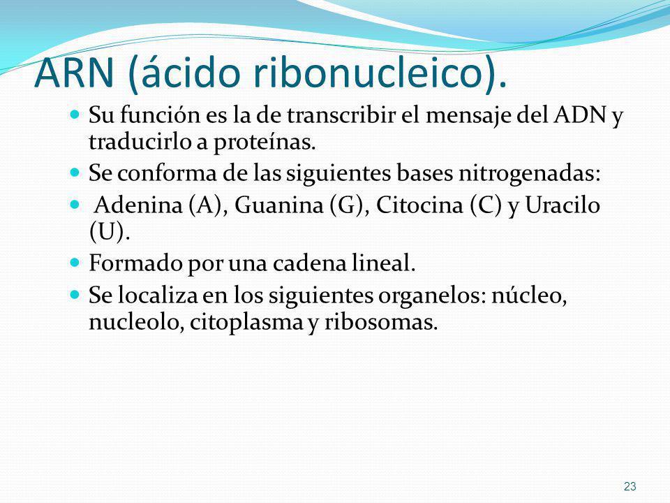 ARN (ácido ribonucleico).