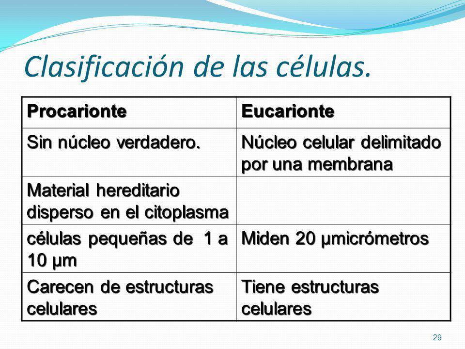 Clasificación de las células.