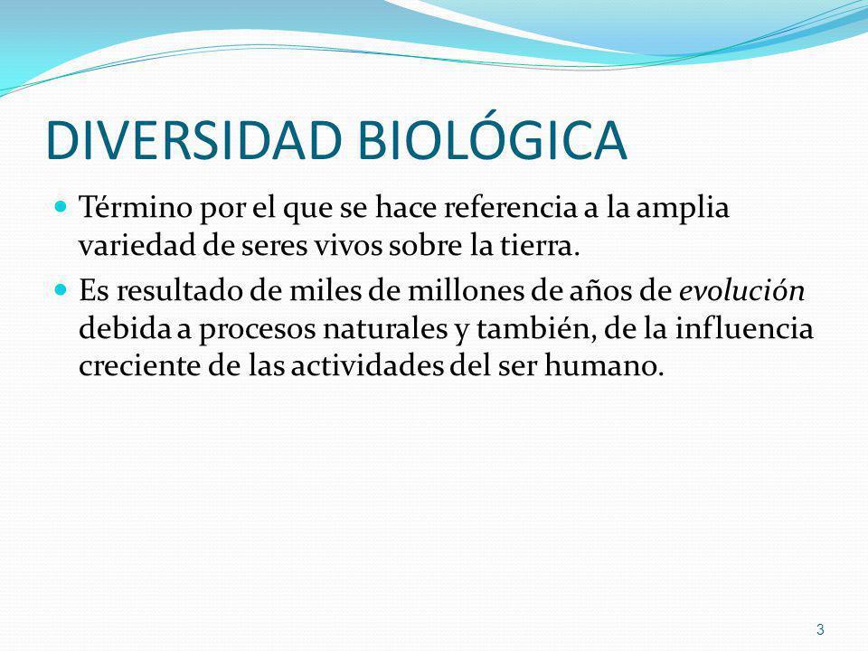 DIVERSIDAD BIOLÓGICA Término por el que se hace referencia a la amplia variedad de seres vivos sobre la tierra.
