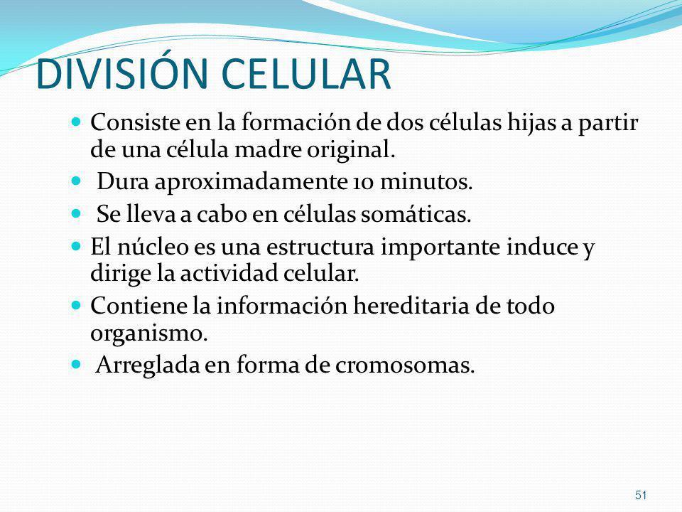 DIVISIÓN CELULAR Consiste en la formación de dos células hijas a partir de una célula madre original.