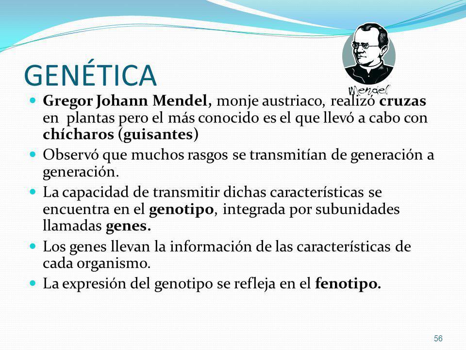GENÉTICA Gregor Johann Mendel, monje austriaco, realizó cruzas en plantas pero el más conocido es el que llevó a cabo con chícharos (guisantes)
