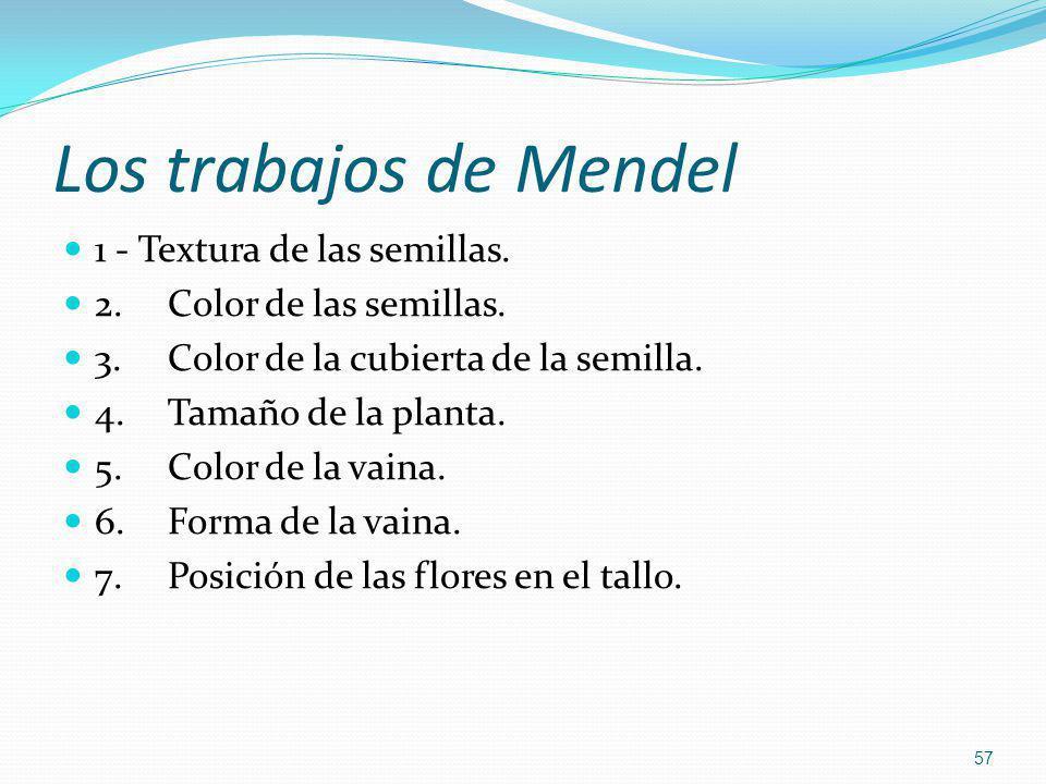 Los trabajos de Mendel 1 - Textura de las semillas.
