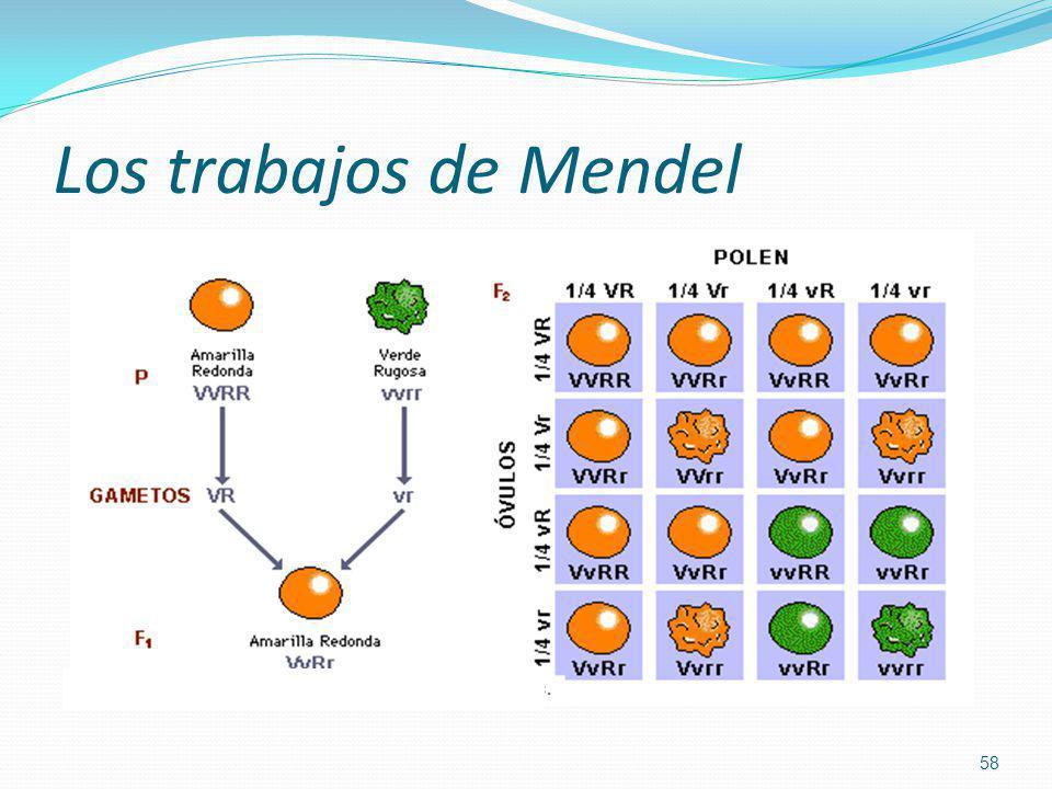 Los trabajos de Mendel
