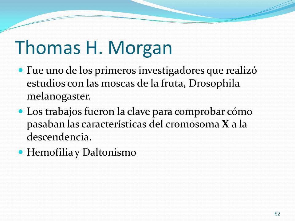 Thomas H. Morgan Fue uno de los primeros investigadores que realizó estudios con las moscas de la fruta, Drosophila melanogaster.