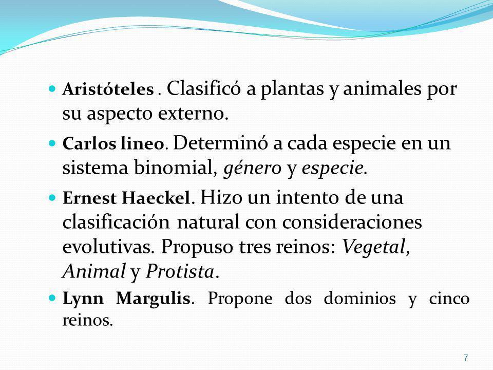 Aristóteles . Clasificó a plantas y animales por su aspecto externo.
