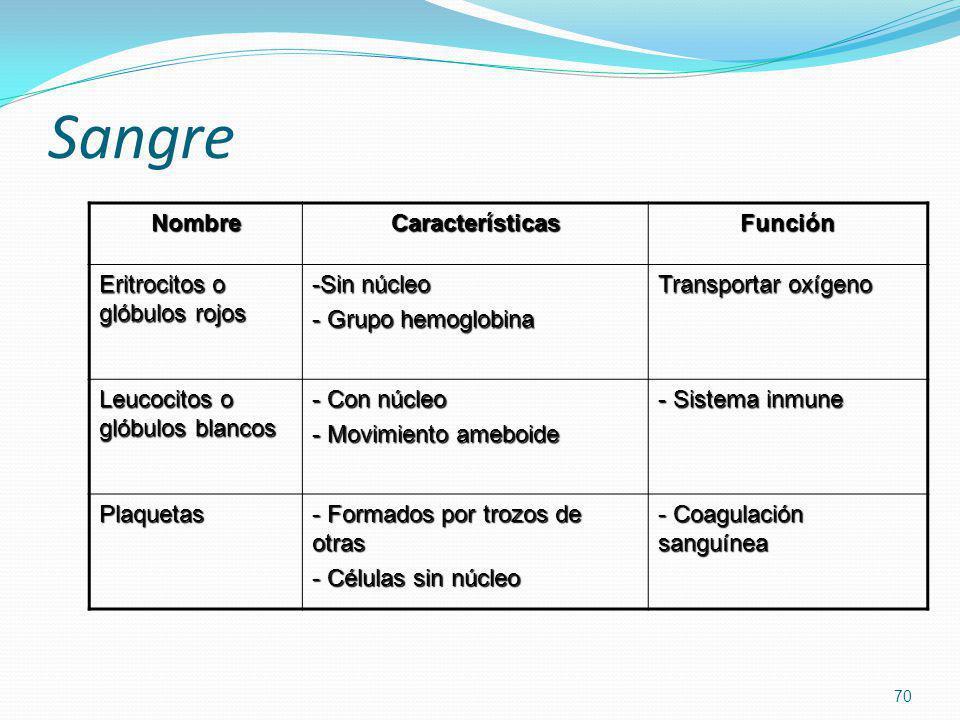Sangre Nombre Características Función Eritrocitos o glóbulos rojos