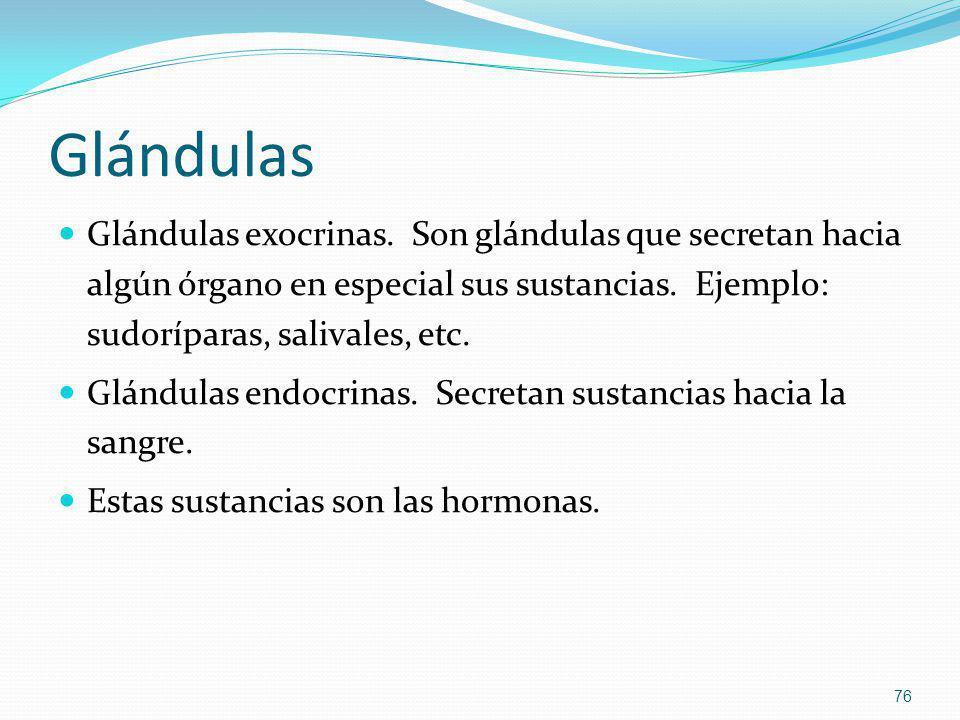 Glándulas Glándulas exocrinas. Son glándulas que secretan hacia algún órgano en especial sus sustancias. Ejemplo: sudoríparas, salivales, etc.