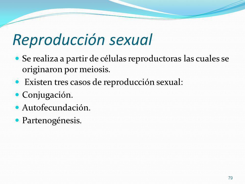 Reproducción sexual Se realiza a partir de células reproductoras las cuales se originaron por meiosis.