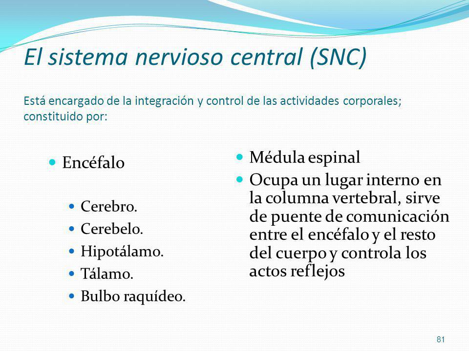 El sistema nervioso central (SNC) Está encargado de la integración y control de las actividades corporales; constituido por:
