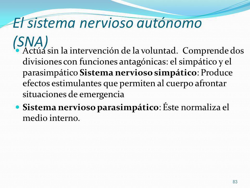 El sistema nervioso autónomo (SNA)