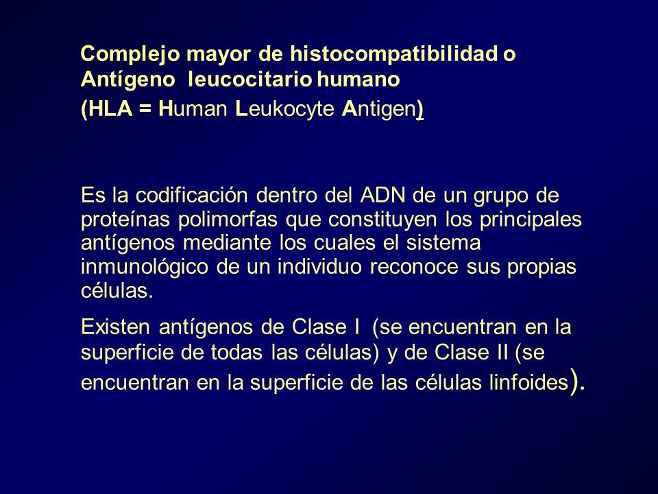 Complejo mayor de histocompatibilidad o Antígeno leucocitario humano