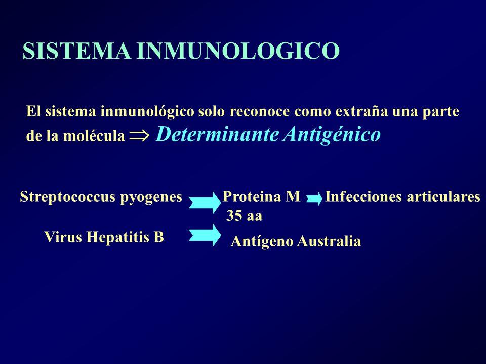 SISTEMA INMUNOLOGICO El sistema inmunológico solo reconoce como extraña una parte. de la molécula  Determinante Antigénico.