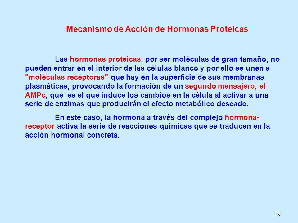 Mecanismo de Acción de Hormonas Proteicas