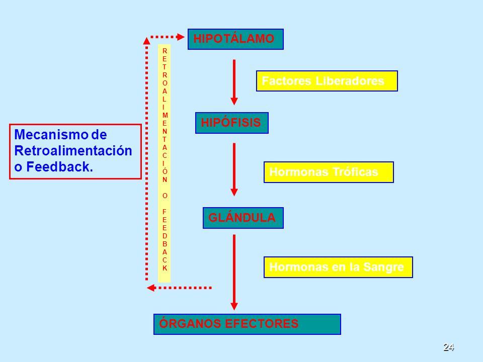 Mecanismo de Retroalimentación o Feedback.