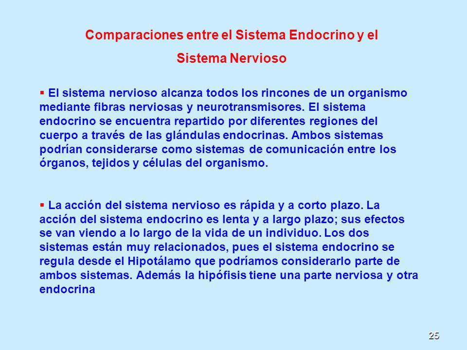 Comparaciones entre el Sistema Endocrino y el