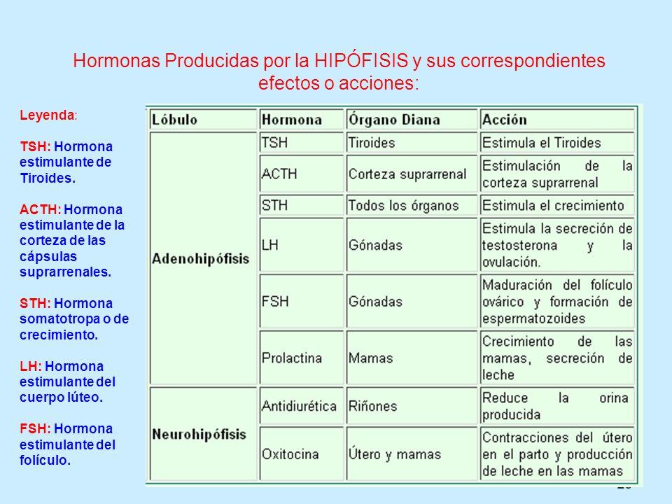 Hormonas Producidas por la HIPÓFISIS y sus correspondientes efectos o acciones: