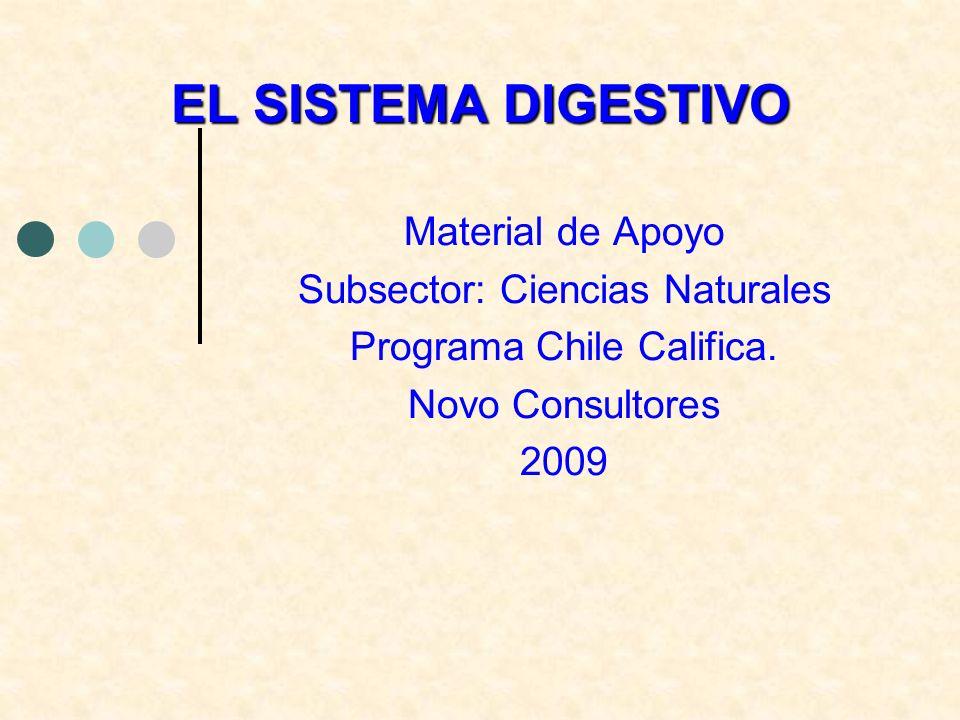 EL SISTEMA DIGESTIVO Material de Apoyo Subsector: Ciencias Naturales