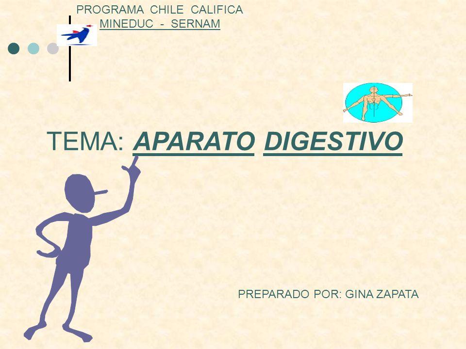 TEMA: APARATO DIGESTIVO