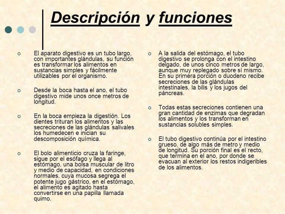 Descripción y funciones