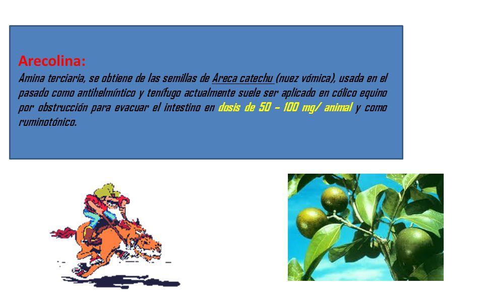 Arecolina: