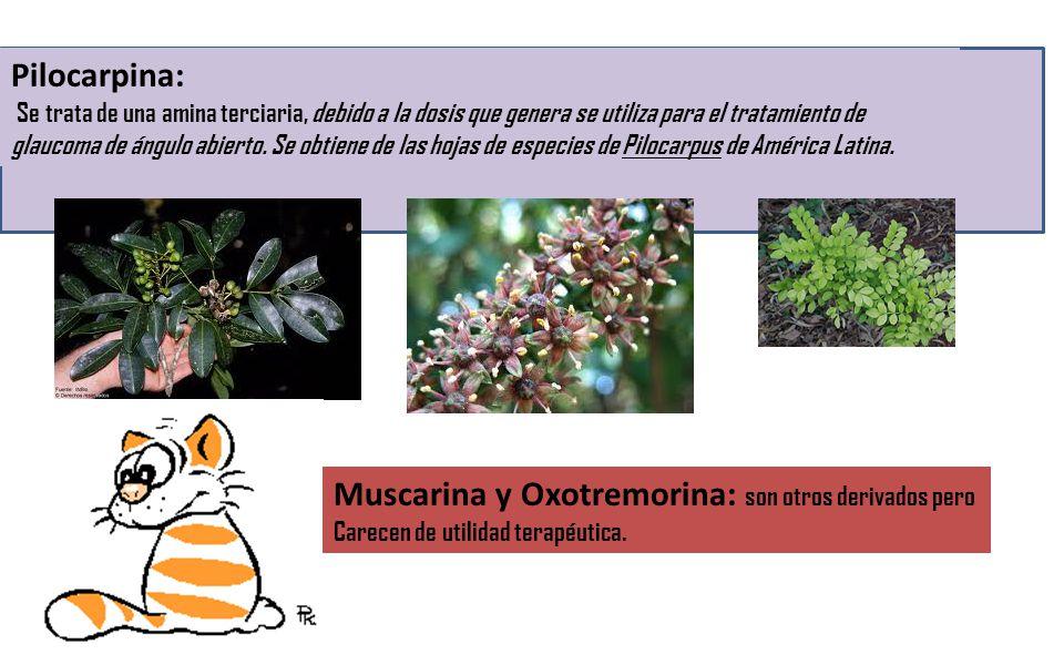 Muscarina y Oxotremorina: son otros derivados pero