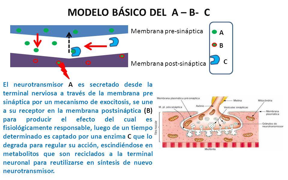 MODELO BÁSICO DEL A – B- C