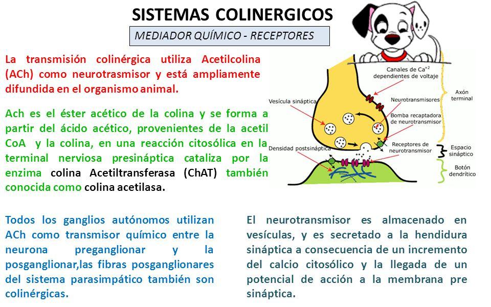 SISTEMAS COLINERGICOS