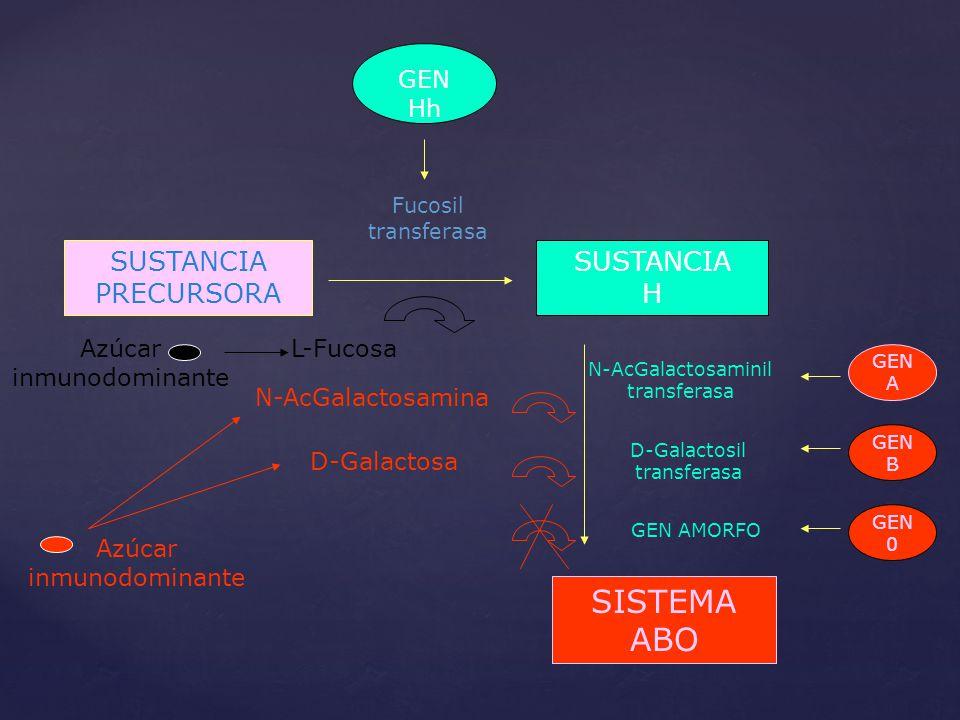 SISTEMA ABO SUSTANCIA PRECURSORA SUSTANCIA H GEN Hh L-Fucosa