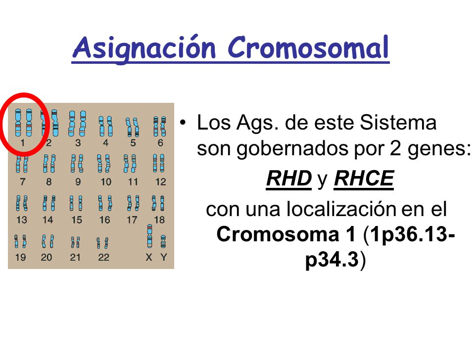 Asignación Cromosomal