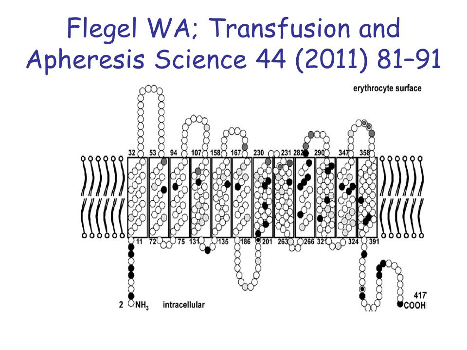 Flegel WA; Transfusion and Apheresis Science 44 (2011) 81–91
